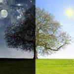 When to Take Atorvastatin Morning Or Night