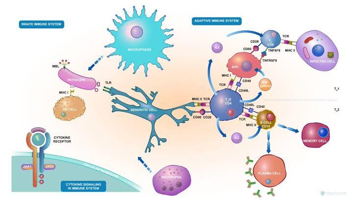 List Of Drugs That Suppress The Immune System